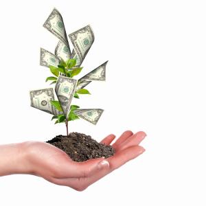 money tree -467366492