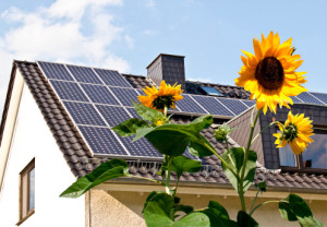 Solar panels at a roof with sun flowers